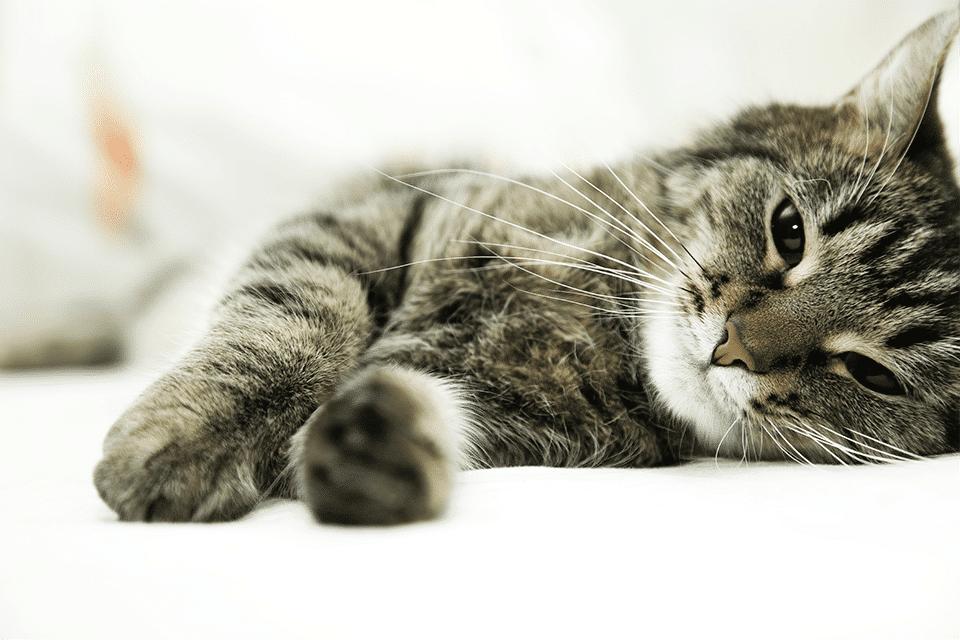 chronische niereninsuffizienz bei katzen kleintierpraxis im moos. Black Bedroom Furniture Sets. Home Design Ideas